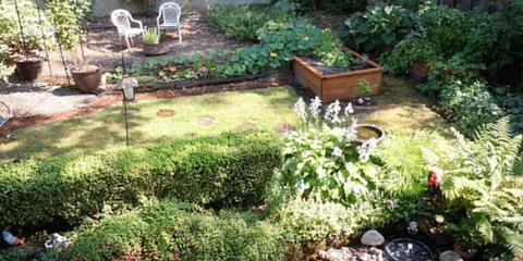 Oregon's Best Arborists Explain Integrated Pest Management and Plant Health Care, Northwest Clackamas, Oregon