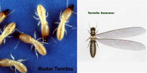 Prevent a Termite Takeover With Lexington's Residential Pest Control Experts, Lexington-Fayette, Kentucky