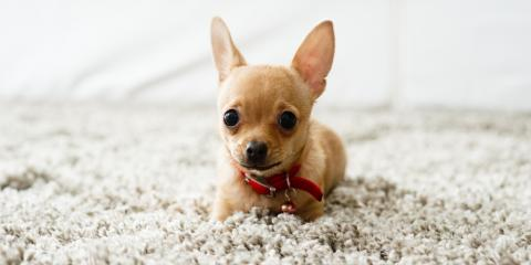 The Top 5 Carpet Cleaning Tips for Pet Owners, Walton, Kentucky