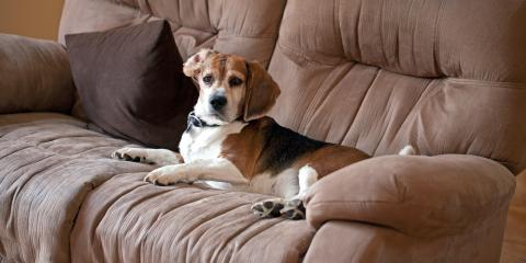 What Couches Are Best for Pet Owners?, Lincoln, Nebraska