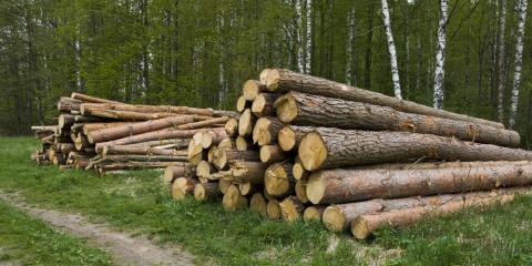 Splitting Wood: The Differences Between Hardwood and Softwood, West Bridgewater, Massachusetts