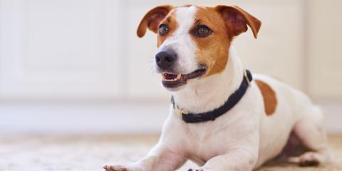 3 House Cleaning Tips for Pet Owners, Clinton, Connecticut