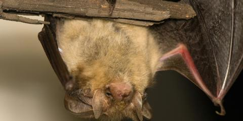 3 Pest Control Tactics You Can Use to Remove Bats From Your Home, Reading, Ohio