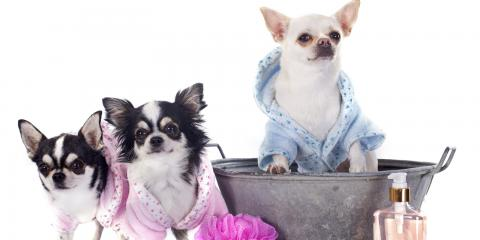 Mia's Bathhouse For Pets, Pet Care, Services, New York, New York