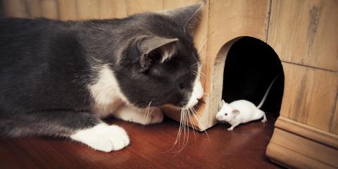 Why Won't the Cat Keep Mice Away?, Versailles, Kentucky
