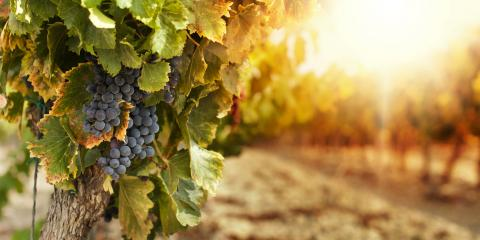 3 Things You Should Know About Kentucky Vineyards, Versailles, Kentucky