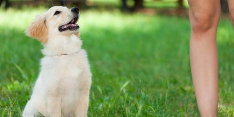 Animal Clinic Shares 5 Ways to Celebrate National Dog Day, Wisconsin Dells, Wisconsin