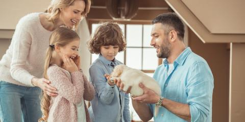 5 Tips for House-Training Your New Puppy, Southgate, Kentucky