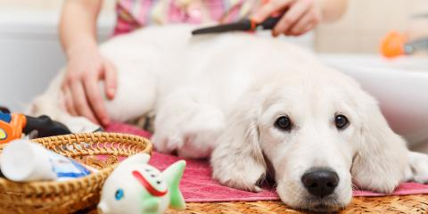 3 Benefits of Pet Grooming, High Point, North Carolina