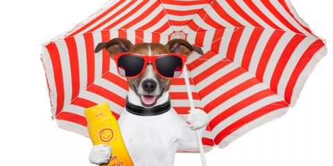 Pets Need Sunscreen Too! 3 Sun Protection Tips From Flatwood's Best Vet, Flatwoods-Russell, Kentucky