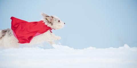 3 Important Pet Care Reminders for Winter, Milford, Ohio