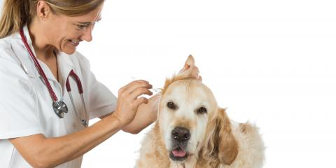 Gulf Shore's Best Animal Clinic Explains How to Clean Your Pet's Ears , Gulf Shores, Alabama