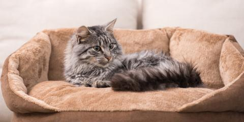 Why You Should Care for Your Cat's Dental Health, Springfield, Ohio