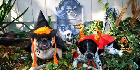 3 Halloween Decorating Tips for Pet Safety, Ewa, Hawaii