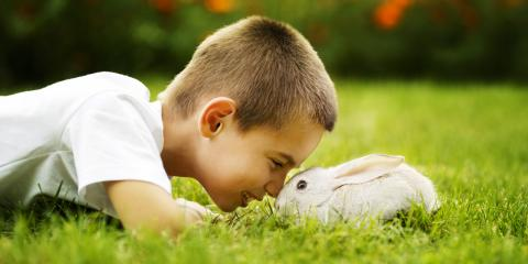 3 Signs Your Pet Rabbit Is Sick, Foley, Alabama