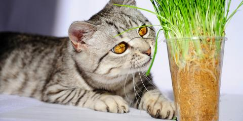 What's the Deal With Catnip? A Veterinarian Explains, Foley, Alabama
