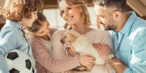 5 Steps to Follow as a New Dog Owner, Avon, New York