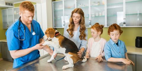A Veterinarian Explains When Dogs Should Start Heartworm Prevention, Sanford, North Carolina