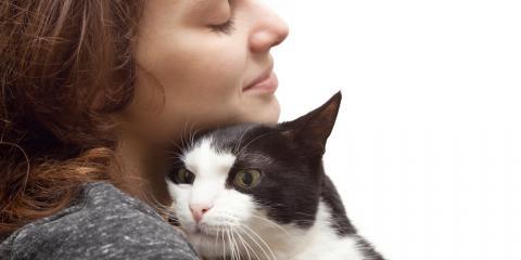 5 Ways to Care for Your Cat Better , Kingman, Arizona