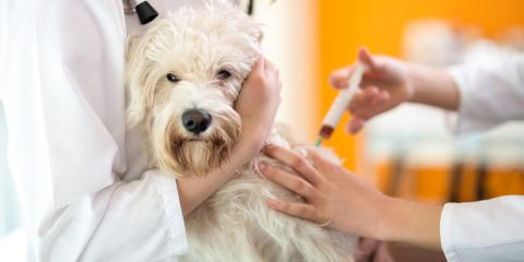 5 Reasons to Vaccinate Your Dog, Columbia, Missouri