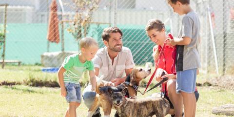 How to Adopt a Pet, Columbia, Missouri