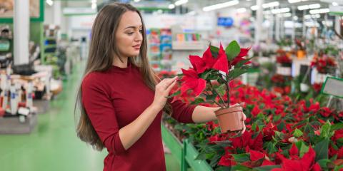 5 Types of Holiday Plants to Keep Away From Pets, Columbia, Missouri
