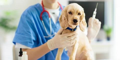 A Guide to the Canine Flu Vaccine, Columbia, Missouri