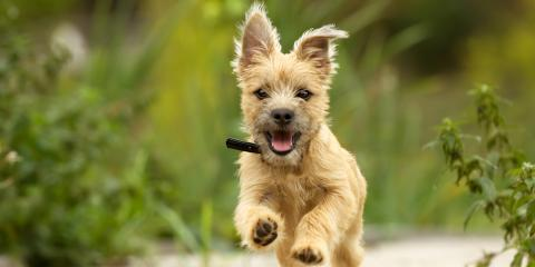 Does Your Dog Need a Flea Treatment? Veterinarians Answer Common Questions, Clarksville, Maryland