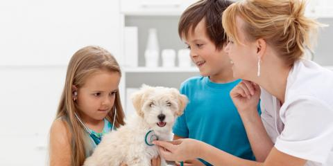4 Important Vaccines for Your Dog or Cat, Columbia, Missouri