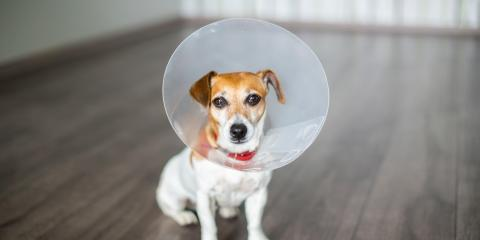 4 FAQ About Getting Your Pet Spayed or Neutered, Covington, Kentucky