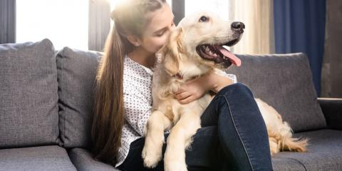 3 Common Dental Issues In Pets, Amsterdam, Virginia
