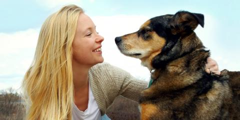 5 Signs Your Dog is Getting Older & How to Help   , Amsterdam, Virginia