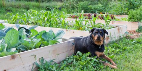 Daleville Veterinarians List 4 Plants That Are Poisonous to Pets, Amsterdam, Virginia