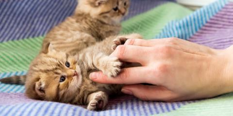 A Guide to Kitten Care, Elkton, Maryland