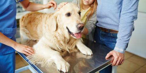 5 Tips to Sooth Your Dog's Anxiety When Visiting the Veterinarian, Fairfield, Ohio
