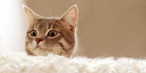 Fairfield Veterinarian Shares 4 Red Flags to Look For in Your Cat, Fairfield, Ohio
