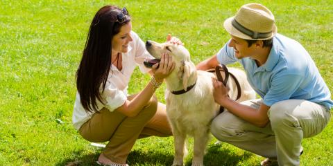 What Do Pet Owners Need to Know About COVID-19?, Florence, Kentucky