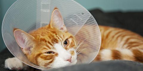 How to Prepare Your Pet for Surgery , Foley, Alabama
