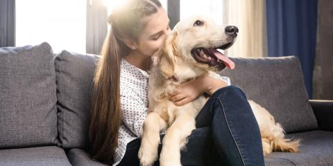 5 Reasons to Have the Veterinarian Spay or Neuter Your Dog, Round Lake, Wisconsin