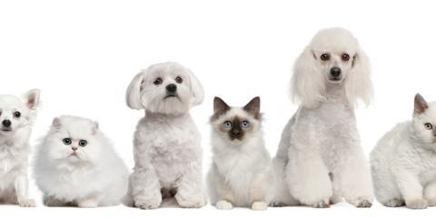 HI Veterinarian's Guide: How Often to Get Dog & Cat Health Checkups, Ewa, Hawaii