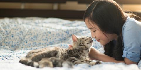 3 Tips for Handling an Emergency With Your Cat, Cabot, Arkansas