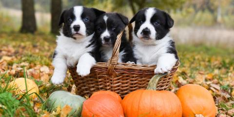 3 Halloween Safety Tips for Pets, High Point, North Carolina