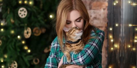 5 Ways to Protect Your Pet Over the Holidays , Koolaupoko, Hawaii