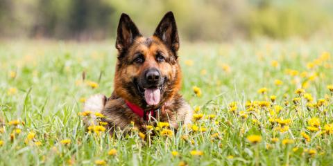 Hawaii's Top Veterinarians Warn of Plants That Are Poisonous to Dogs, Hilo, Hawaii
