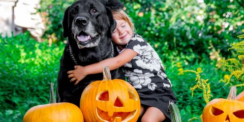 3 Tips to Keep Pets Safe This Halloween, Honolulu, Hawaii