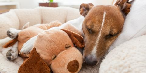 4 Pet Safety Tips for New Year's Eve, Honolulu, Hawaii