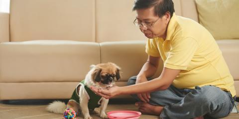 Is It Okay to Feed a Dog Table Scraps?, Honolulu, Hawaii