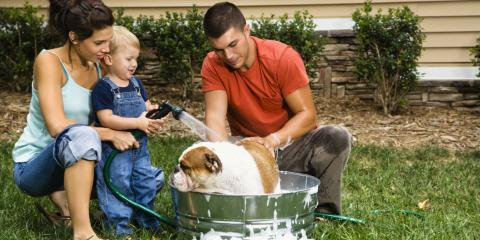5 Tips For Bathing Your Dog, Mineral Springs, North Carolina