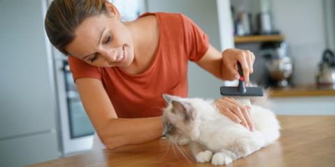 How Often Should You Groom Your Pet?, Koolaupoko, Hawaii