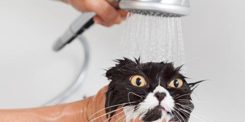 A Guide to Pet Grooming for Cats That Hate Water, Shelby, Wisconsin